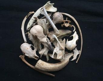 Mink leg bones femur small animal skeleton craft fossil dig Bone Jewelry