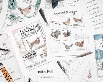 Bird Study, Charlotte Mason Nature Journal, Charlotte Mason Nature Study, Bird Nature Journal, Nature Study Kindergarten Activities, Birds