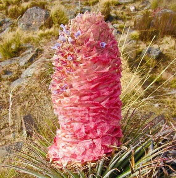 Vasi di fiori vaso quadrangolare quadrangolare pentole pentola stabile 9x9x9,5cm NUOVO!!!