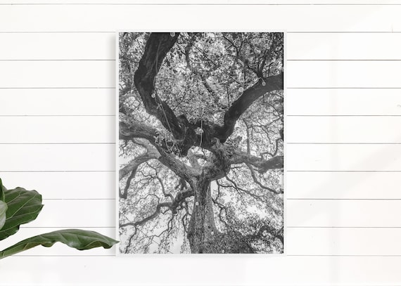 Oak Tree Print - Austin Texas Photo - Black & White Photography - Tree Wall Art - Nature Home Decor - Artwork