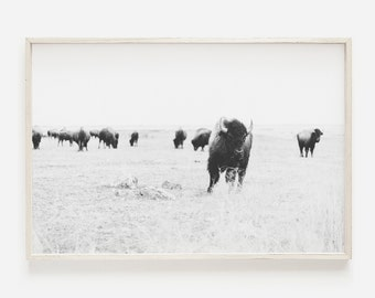 Buffalo Wall Art, Bison Print, Bison Wall Art, Americana, Western Wall Art Decor, Bison Poster, Southwestern Wall Art, Printable Bison Art