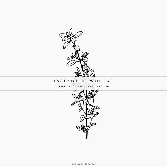 Thyme Svg Vector Herbs Thyme Clipart Illustration Leaves Etsy