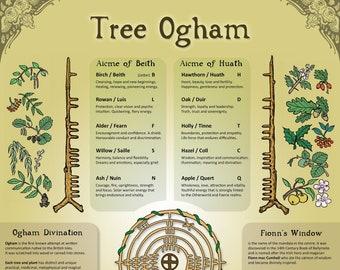 Tree Ogham, ecofriendly A3 Print, Wall Art Poster, Infographic, Correspondance Chart, Celtic, Pagan, Druid, Tree Wisdom