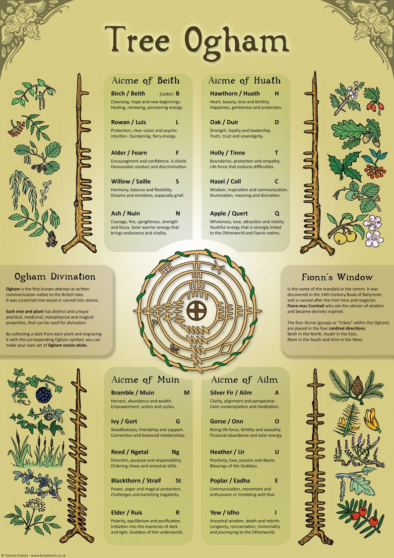 Tree Ogham  Infographic  A3 Poster image 0