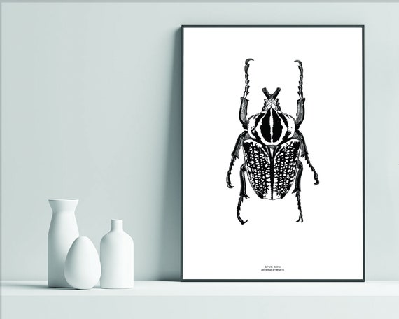 Colored Pencil Hand Drawn Art Prints INSTANT DOWNLOAD Goliath Beetle Nature Bug Insect Printable Note Cards Digital Download