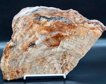 Petrified Wood Slab