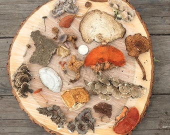 25 pieces! Dried mushrooms for crafting.