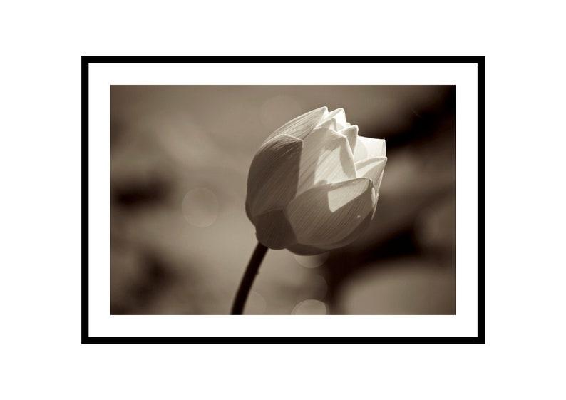 Minimalist Flower Print Sepia Photography Lotus Artwork image 0