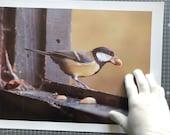 Fine Art Print, Wild Bird and Nuts