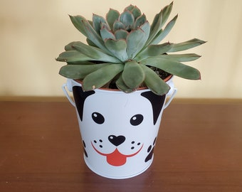 """Echeveria Succulent in Tin Bucket with Dog Face, 4"""" live plant in animal planter"""