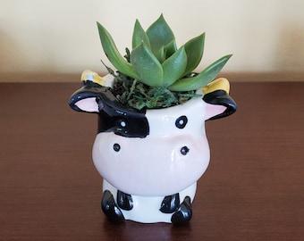 Cow Planter with Succulent, Potted Succulents, Succulent Gift, Echeveria Agavoides, Farm Animal Planter, Succulent Pot, Cow Figurine