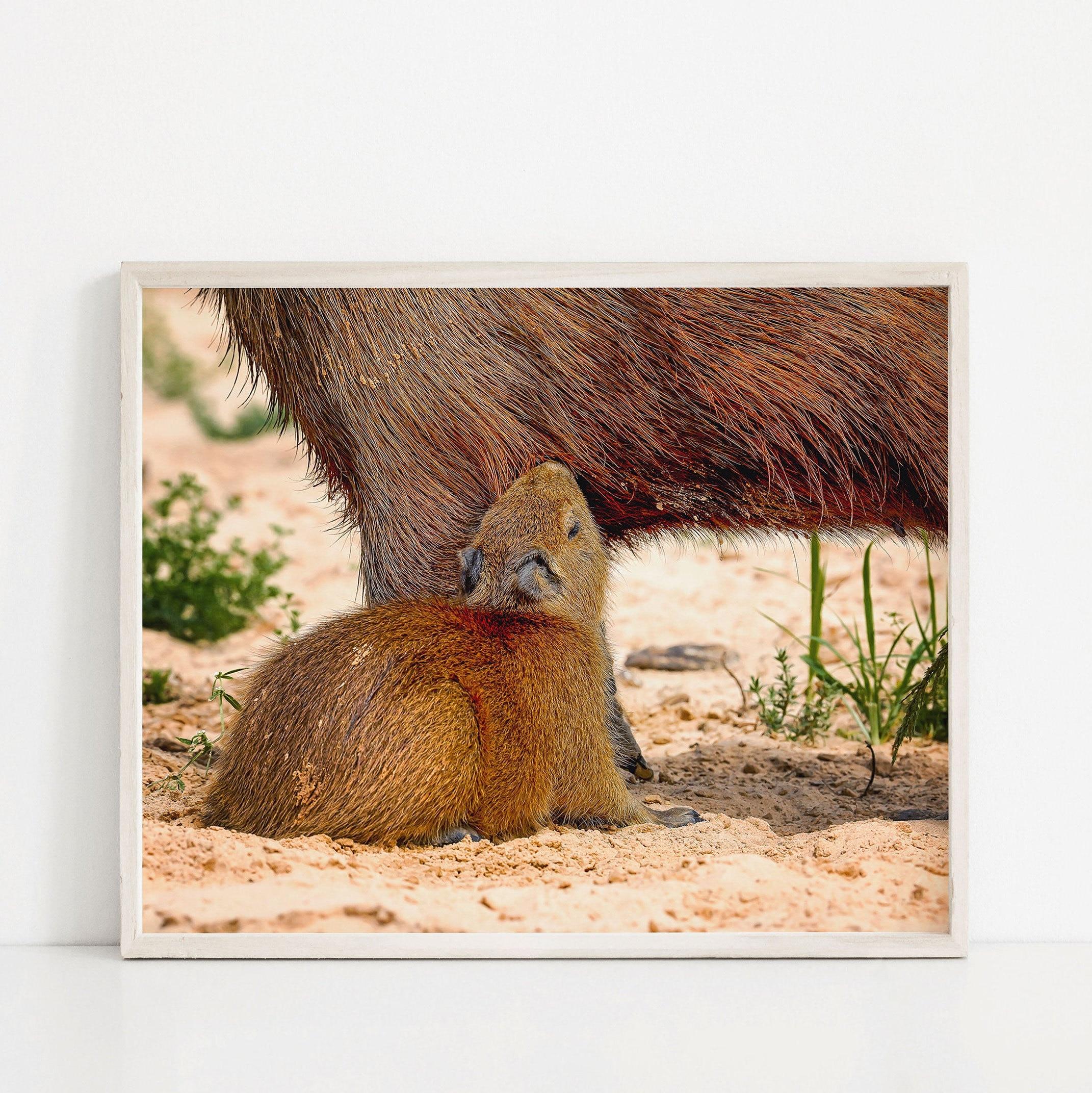 Capybara art print fine art print black and white print animal art A1 A2 A3 A4 A5
