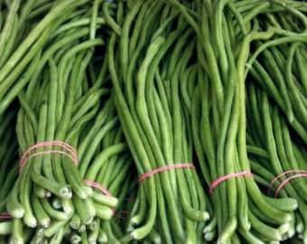 Yard Long Bean Dark Green Seeds