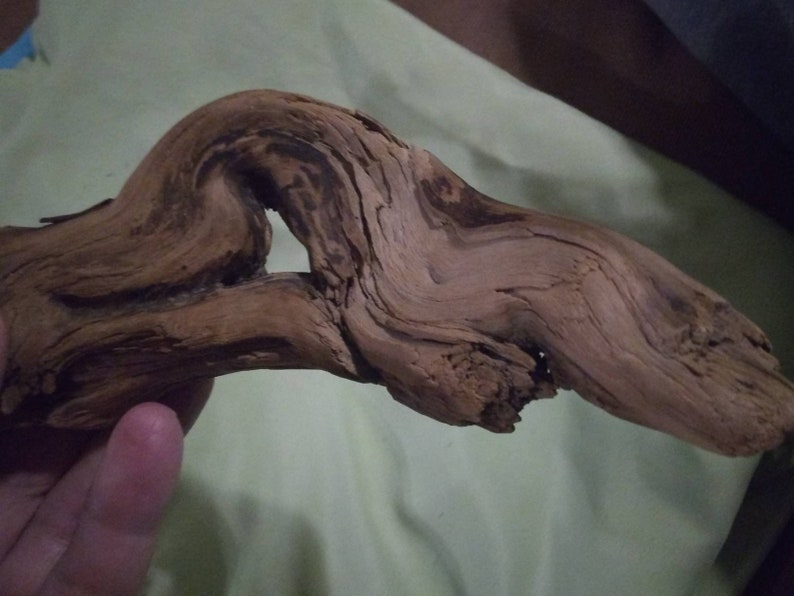Gnarly piece of driftwood for aquarium fall decor conversation piece holiday season Freshwater driftwood twisted gnarly smooth