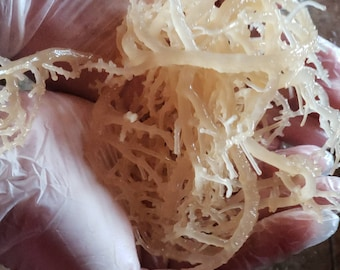 New***Kosher Dill Organic-Wild-crafted Irish Moss (Sea Moss) *8 oz* Garnish