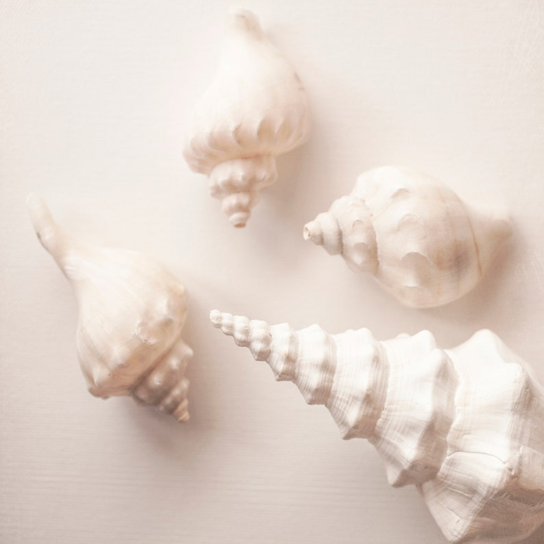 set 4 photos or canvas wraps add a slice of the coast to your walls for an all year round calming beach vibe The Pale Shell Collection