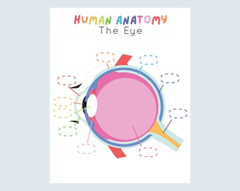 Eye Anatomy Kids Printable, Human Anatomy Activity, Preschool Science, Busy book science page, My body activity, Busybook Science