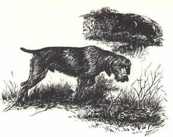 German Wirehaired Pointer - Antique Matted Dog Print - 1964 Raymond Pease