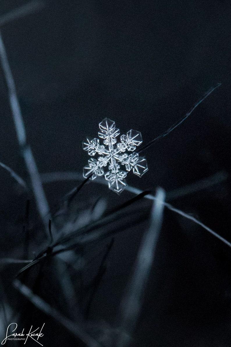 Vermont Macro Snowflake Photography Print Holiday Snowflake image 0