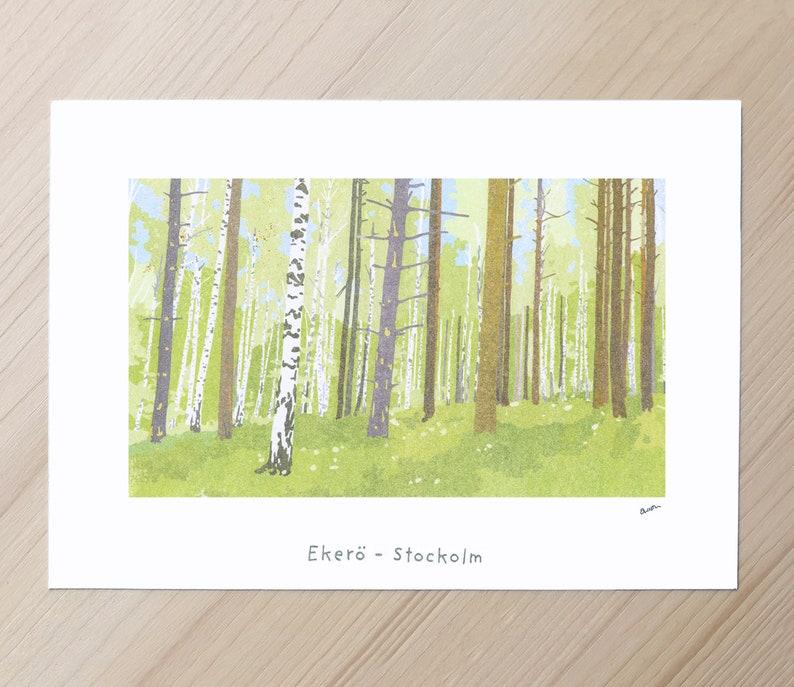 Birch Trees Eker\u00f6 A4 Print Scandinavian Wall Art Stockhom Forest Swedish Landscape