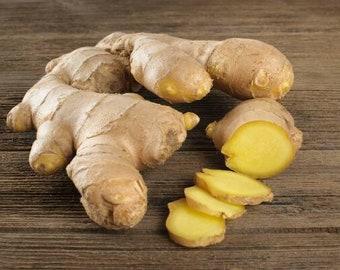 8//16 oz Fresh Ginger Rhizomes Plant Or Eat FROM HAWAII ZINGIBER OFFICINALE