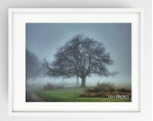 Moor Park, Horse Chestnut Tree in the Mist, Large Wall Art Print, Preston, Prestonian, Colour, Winter, Moor Park in the Mist