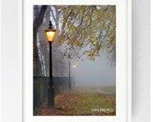 Avenham Park, Avenham Colonnade, Large Wall Art Print, Colour, Winter, Fog, Lancashire, Atmospheric