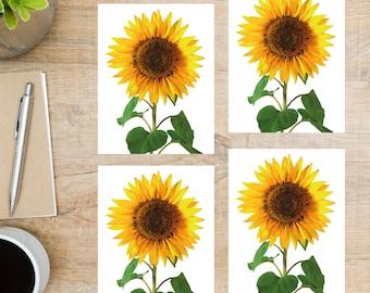 stationary natural photos nature photography 5 card set sunflowers Postcard set notecards