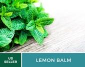 Organic Lemon Balm - 100 Seeds - Medicinal Culinary Herb - Heirloom - GMO Free (Melissa officinalis)