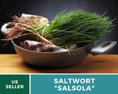 Saltwort - Salsola - 50 Seeds - Culinary Medicinal Herb - Japanese Land Seaweed - GMO Free (Salsola komarovii)