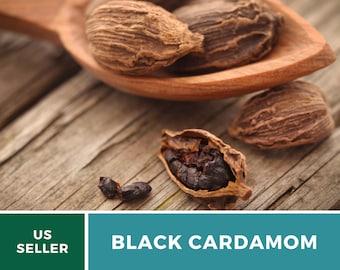 Cardamom, Black - Rare Heirloom Seeds - Culinary Spice & Medicinal - GMO Free (Amomum Subulatum)