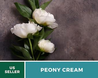 Peony Poppy, Cream  - 100 Seeds - Beautiful Large Flower (Papaver paeoniflorum)