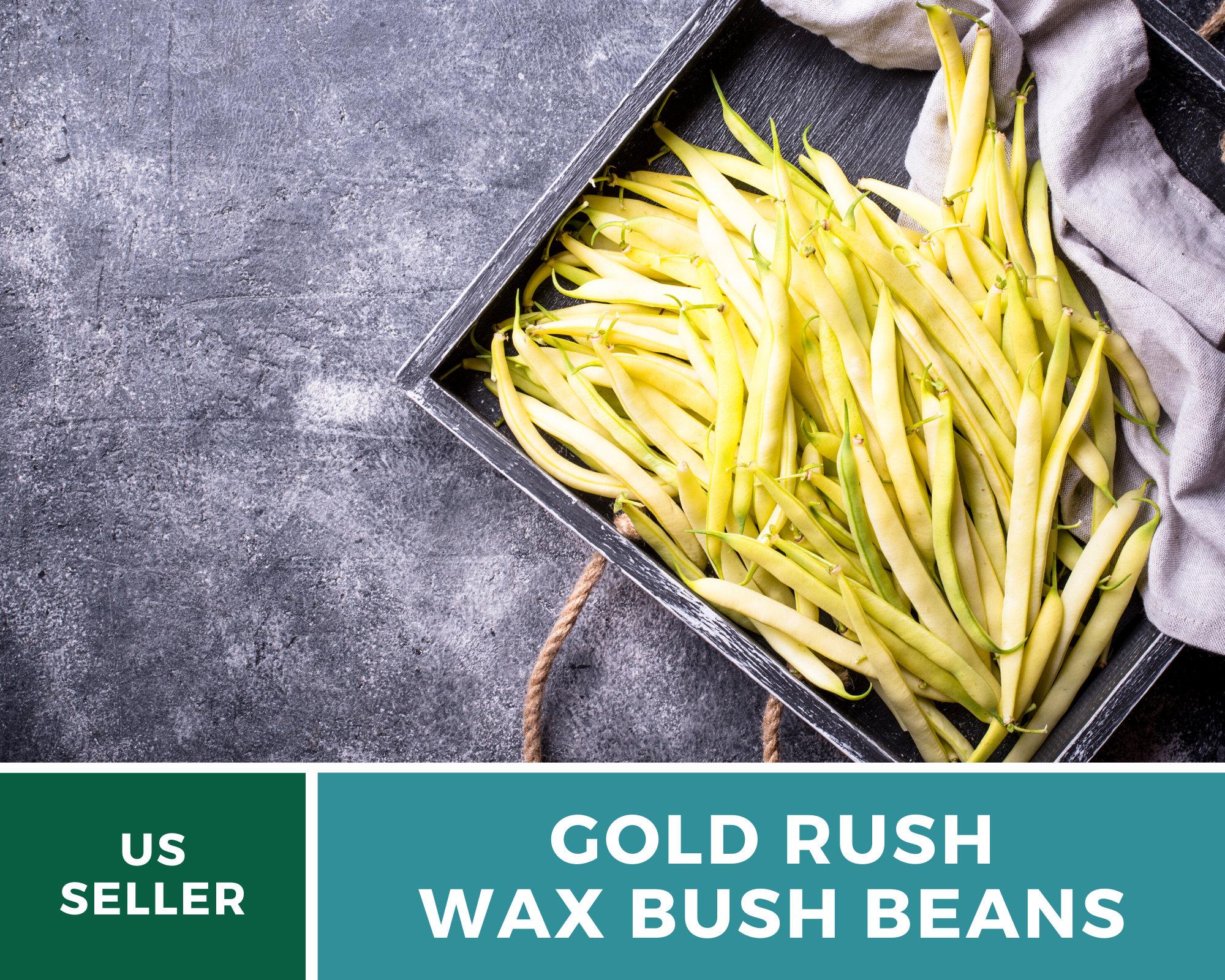 15 Heirloom Bush Bean Fajták
