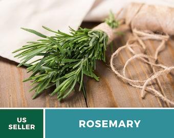 Rosemary - 100 Seeds - Medicinal & Culinary Herb - GMO Free (Rosemarinus Officinalis)