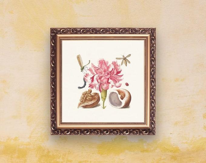 Medieval Classics: Carnation | Square Print | Wall Art | Carnation Poster | Medieval Art | Renaissance Wall Art | Art Print | Office Décor