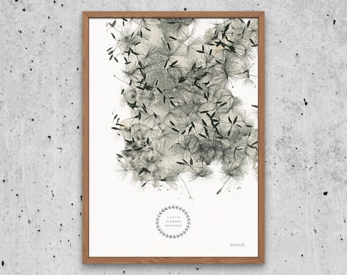 Dandelion Seeds Art Print | Wildflowers Print | Botanical ephemera | Photography Pioneer | Calotype | Botanical book | Vintage floral poster