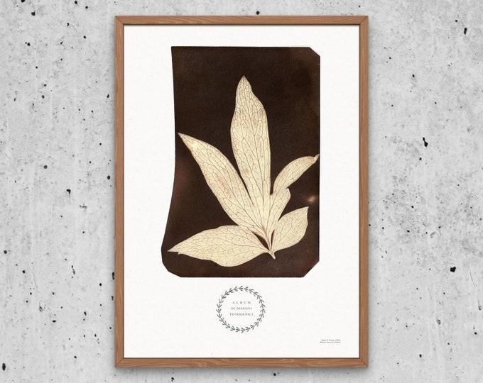 Foglia di Peonia Art Print | Wildflowers Print | Botanical ephemera | Photography Pioneer | Botanical book | Vintage floral poster
