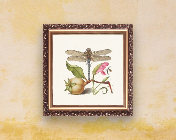 Medieval Classics: Dragonfly | Square Print | Wall Art | Dragonfly Poster | Medieval Art | Renaissance Wall Art | Art Print | Office Décor