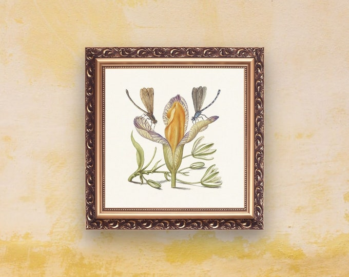 Medieval Classics: Spanish Iris | Square Print | Wall Art | Medieval Art | Renaissance Wall Art | Art Print | Office Décor