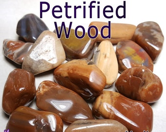 Petrified Wood (Arizona) MEDIUM Tumbled Gemstone - 1, 3, or 5 pack - 20 to 25mm or 0.7 to 1 inch - Natural Healing Reiki Chakra