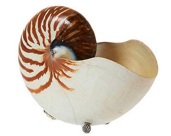 Large 7 inch Tiger Nautilus Shell with Sterling Silver Basket Weave supports