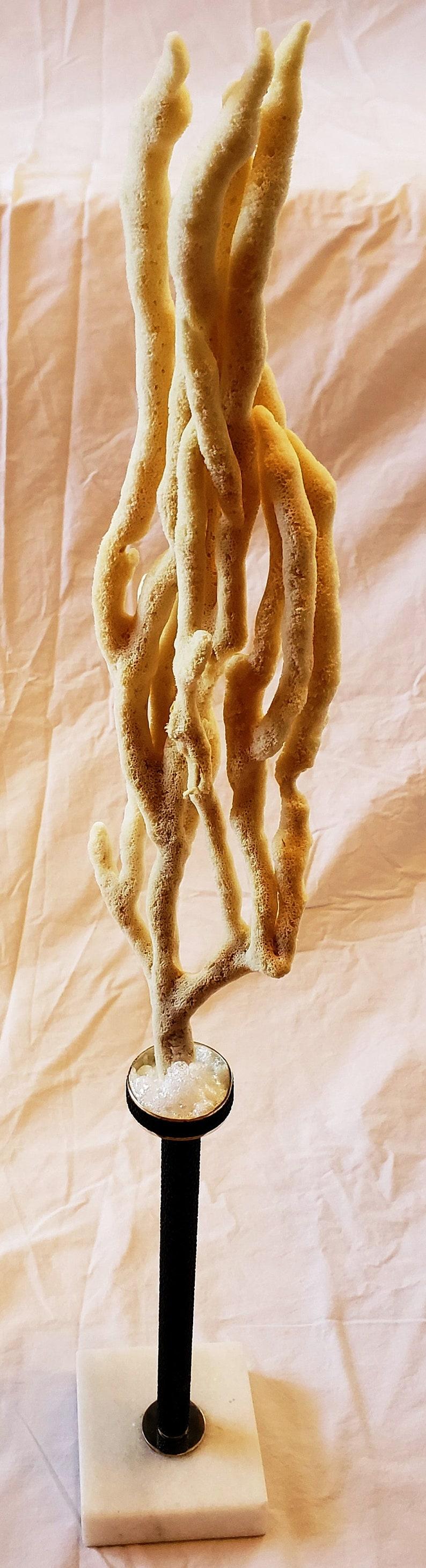 Finger Sponge mounted n Sea Foam atop a pedestal wrapped in Black Sea Cucumber Leather
