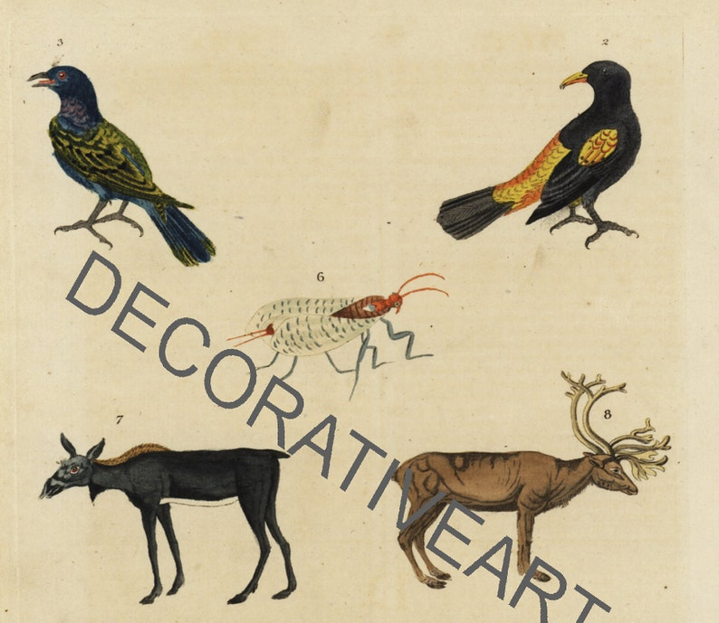 Natural history Extinct birds,fish and insects  antique hand colored engraved plate from William/'s Encyclopedia 1780