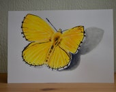 Yellow butterfly original illustration made with watercolour paints and coloured pencils