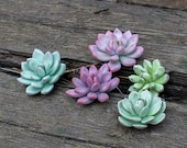 Succulent plant pin, Echeveria jewelry brooch, Succulents accessory, Succulent boutonniere, Plant accessories, Succulents gift, Pin brooch