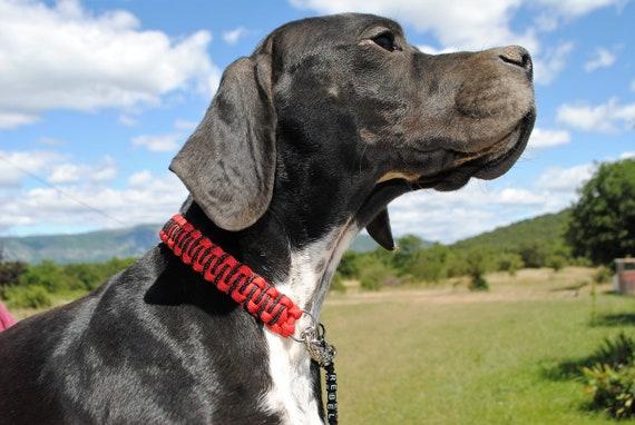 Dog Collar Zig Zag Red - width 2cm - Wouf leash