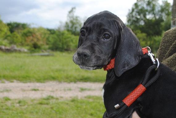 Collar dog Neon Orange - width 2cm - Leash of wouf