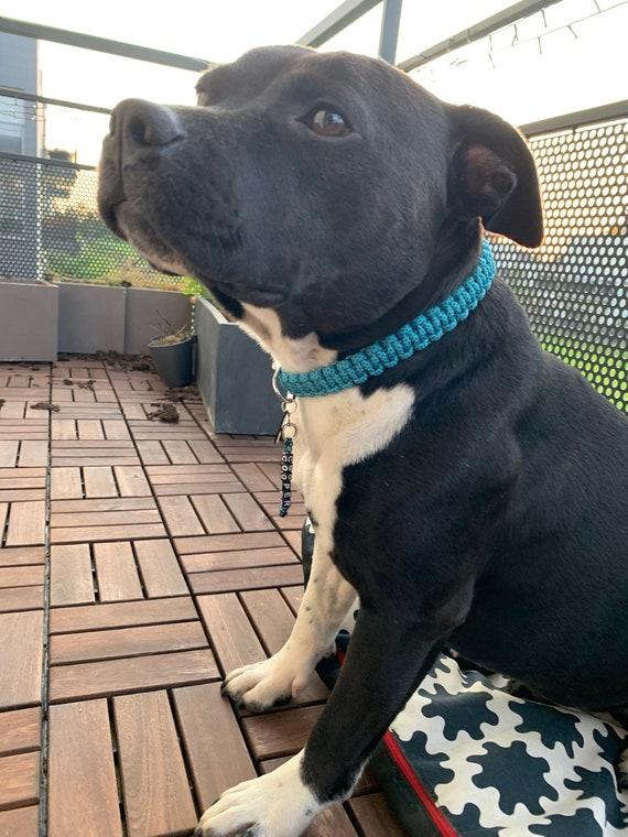 Turquoise Diamond dog collar - width 2cm - Wouf leash