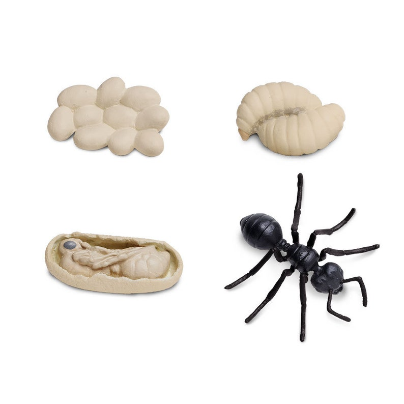 Life Cycle of an Ant Figurine Homeschool Learning Tool Home Education Matching Childrens Activity Toy Montessori School Safari Ltd Insect