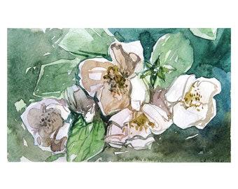 Jasmine Blooms Watercolor Painting by Vilebedeva. Handmade Original Sketch.